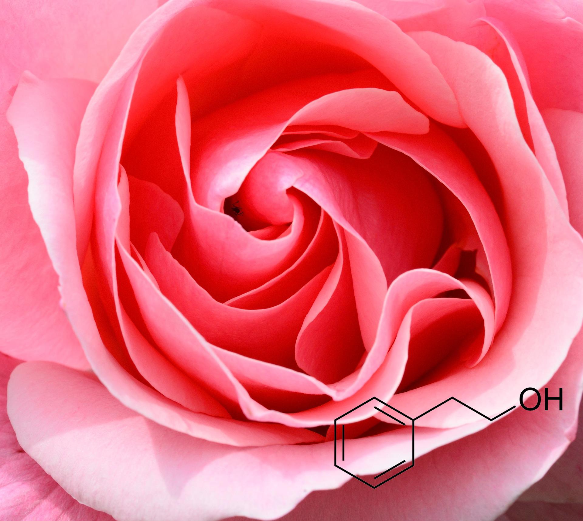 장미와 화학원소 모형도