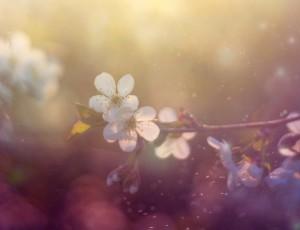 봄꽃이 보이고 미세먼지로 공기 중이 뿌옇게 보인다.