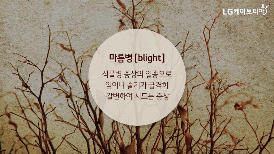 마름병 [blight] 식물병 증상의 일종으로 잎이나 줄기가 급격히 갈변하여 시드는 증상
