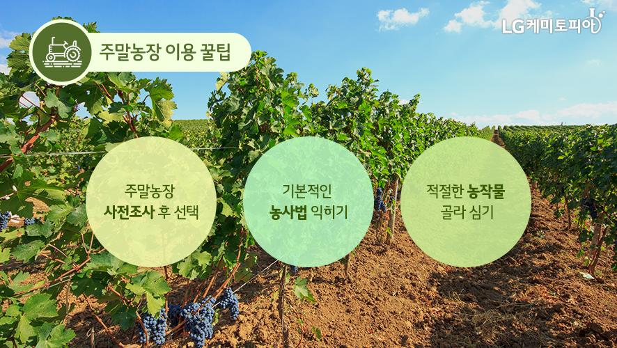 주말농장 이용 꿀팁: 주말농장 사전조사 후 선택, 기본적인 농사법 익히기, 적절한 농작물 골라 심기