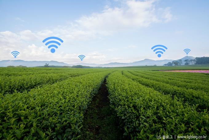 농장 위에 와이파이 아이콘이 떠다니는 사진. (LG 블로그 / www.lgblog.co.kr)