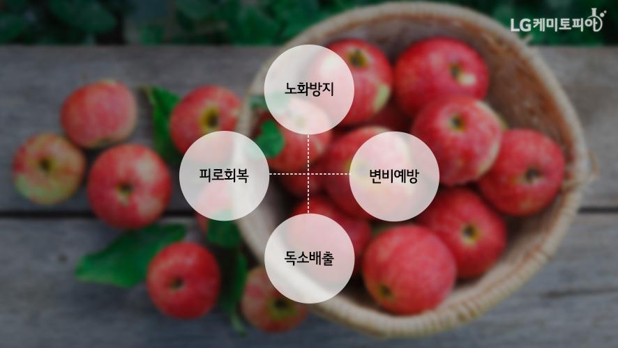 사과의 효능: 노화방지, 피로회복, 변비예방, 독소배출