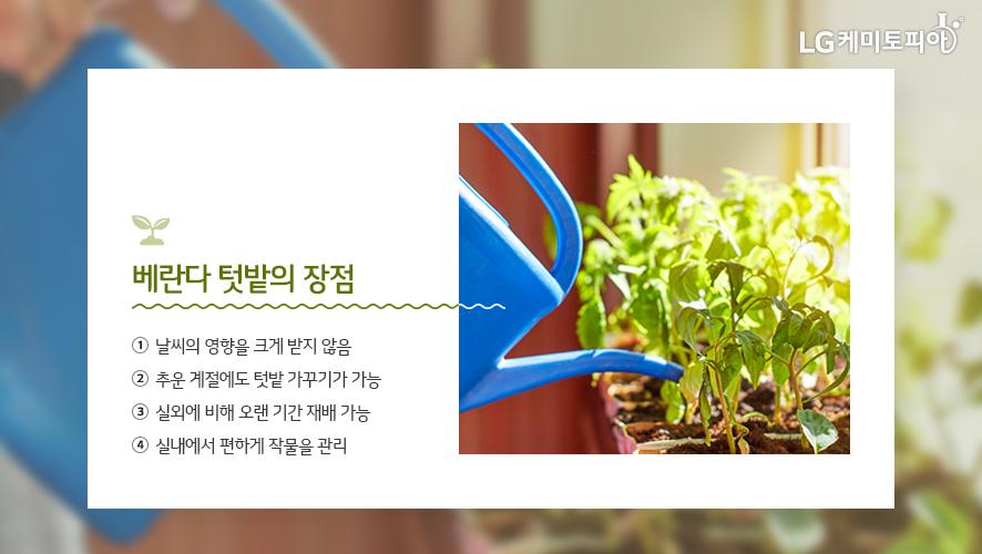 베란다 텃밭의 장점: ① 날씨의 영향을 크게 받지 않음 ② 추운 계절에도 텃밭 가꾸기가 가능 ③ 실외에 비해 오랜 기간 재배 가능 ④ 실내에서 편하게 작물을 관리