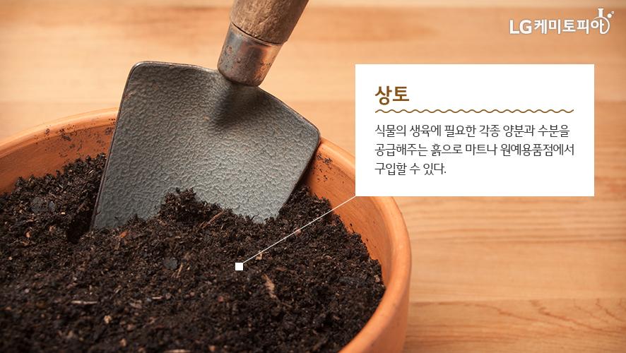 상토: 식물의 생육에 필요한 각종 양분과 수분을 공급해주는 흙으로 마트나 원예용품점에서 구입할 수 있다.