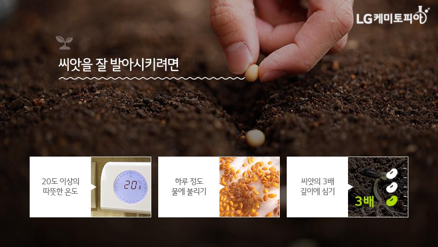씨앗을 잘 발아시키려면 20도 이상의 따뜻한 온도, 하루 정도 물에 불리기, 씨앗의 3배 깊이에 심기