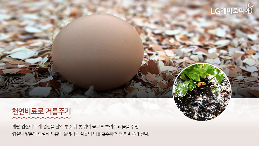 천연비료로 거름주기: 계란 껍질이나 게 껍질을 잘게 부순 뒤 흙 위에 골고루 뿌려주고 물을 주면 껍질의 양분이 희석되어 흙에 들어가고 작물이 이를 흡수하여 천연 비료가 된다.