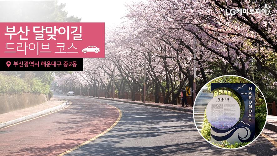 부산 달맞이길 드라이브 코스 (부산광역시 해운대구 중2동)