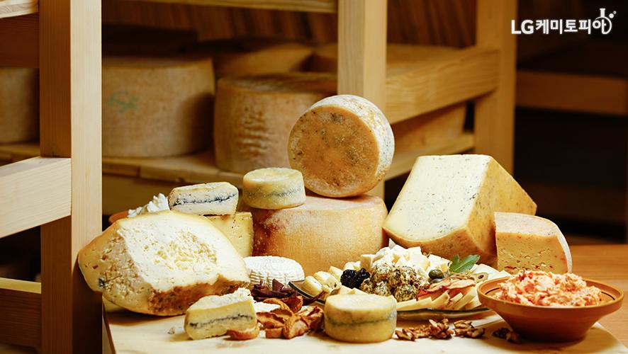 다양한 종류의 치즈