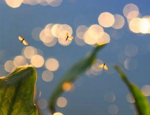 숲 속에 모기들이 날라다닌다.