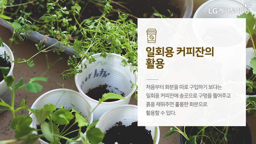 일회용 커피잔의 활용:처음부터 화분을 따로 구입하기 보다는 일회용 커피잔에 송곳으로 구멍을 뚫어주고 흙을 채워주면 훌륭한 화분으로 활용할 수 있다.