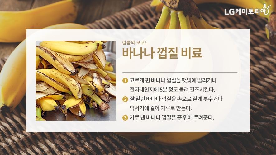 칼륨의 보고! 바나나 껍질 비료 - ① 고르게 편 바나나 껍질을 햇빛에 말리거나 전자레인지에 5분 정도 돌려 건조시킨다. ② 잘 말린 바나나 껍질을 손으로 잘게 부시거나 믹서기에 갈아 가루로 만든다. ③ 가루 낸 바나나 껍질을 흙 위에 뿌려준다.