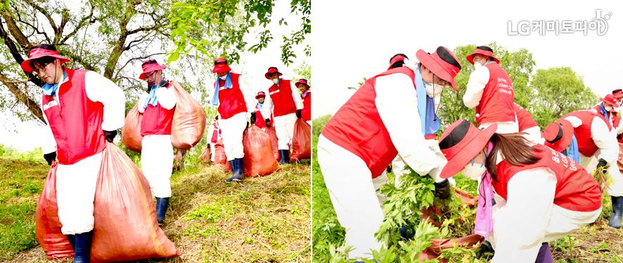 사람들이 밤섬 유해식물 제거 및 환경 정화 활동을 하고 있다.