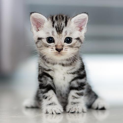 고양이가 '야옹' 하고 우는 이유 게시글 이미지
