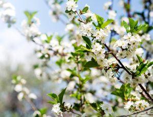 2019 봄꽃축제