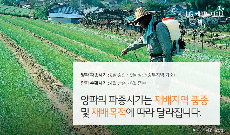 양파의 파종시기는 재배지역 품종 및 재배목적에 따라 달라집니다.