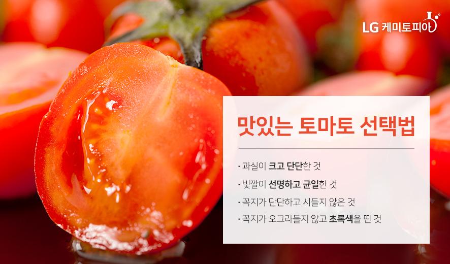 맛있는 토마토 선택법