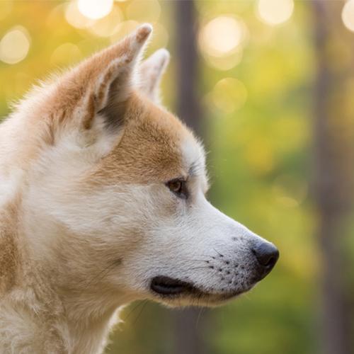 개 후각이 폐암을 조기 발견할 수 있다? 게시글 이미지